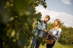 Jeunes couples dans le vignoble Photographie stock