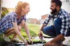 Jeunes couples des agriculteurs travaillant en serre chaude photographie stock libre de droits