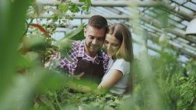 Jeunes couples heureux de fleuriste dans le tablier fonctionnant en serre chaude La femme gaie embrassent ses fleurs de arrosage  Photo stock