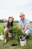 Jeunes couples heureux faisant du jardinage ensemble Photo libre de droits