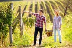 Jeunes couples marchant dans le vignoble énorme Photographie stock libre de droits