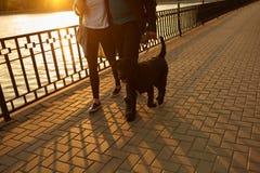 Jeunes couples prenant le chien pour la promenade dans la ville Image stock