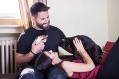 Jeunes couples tenant des chats dans des mains Image stock