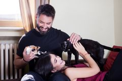 Jeunes couples tenant des chats dans des mains Images libres de droits