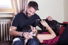 Jeunes couples tenant des chats dans des mains Photo libre de droits