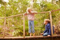 Jeunes enfants de mêmes parents jouant sur un pont dans une forêt Images libres de droits