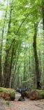 Jeunes femmes adultes explorant le chemin forestier image stock