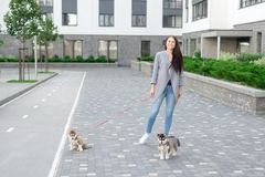 Jeunes femmes attirantes marchant avec le chiot de deux chiens de traîneau sur la rue Photo stock