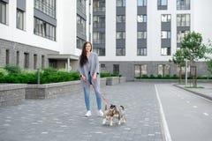 Jeunes femmes attirantes marchant avec le chiot de deux chiens de traîneau sur la rue Photographie stock