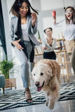 Jeunes femmes d'affaires jouant avec le chien de golden retriever dans le bureau moderne Photographie stock libre de droits