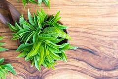 Jeunes feuilles moulues d'aîné avec l'espace de copie Photo stock