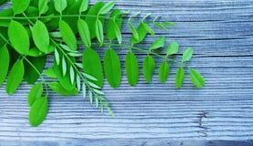 Jeunes feuilles vertes d'un acacia sur une surface en bois images libres de droits