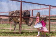 Jeunes filles de sourire heureuses d'enfant alimentant l'autruche d'émeu à la ferme d'oiseau Photos stock