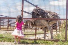 Jeunes filles de sourire heureuses d'enfant alimentant l'autruche d'émeu à la ferme d'oiseau Images libres de droits