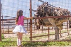 Jeunes filles de sourire heureuses d'enfant alimentant l'autruche d'émeu à la ferme d'oiseau Photo libre de droits