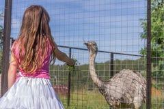 Jeunes filles de sourire heureuses d'enfant alimentant l'autruche d'émeu à la ferme d'oiseau Images stock