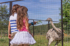 Jeunes filles de sourire heureuses d'enfant alimentant l'autruche d'émeu à la ferme d'oiseau Photographie stock