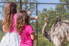 Jeunes filles de sourire heureuses d'enfant alimentant l'autruche d'émeu à la ferme d'oiseau Photo stock