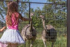 Jeunes filles de sourire heureuses d'enfant alimentant l'autruche d'émeu à la ferme d'oiseau Image libre de droits