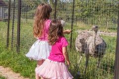 Jeunes filles de sourire heureuses d'enfant alimentant l'autruche d'émeu à la ferme d'oiseau Photos libres de droits