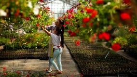 Jeunes fleuristes appréciant le travail en serre chaude clips vidéos