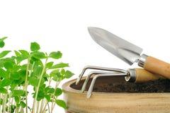Jeunes fleurs d'impatiens et outils de jardinage Photographie stock libre de droits