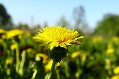 Jeunes fleurs sur le champ au printemps Photos stock