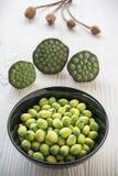 Jeunes graines de lotus Photographie stock libre de droits
