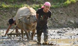 Jeunes hommes labourant la rizière avec le buffle d'eau images stock