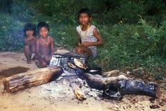 jeunes indigènes indiens de guaja du Brésil d'awa Photographie stock