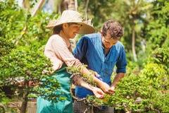 Jeunes jardiniers avec des bonsaïs image libre de droits