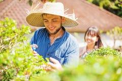 Jeunes jardiniers avec des bonsaïs image stock