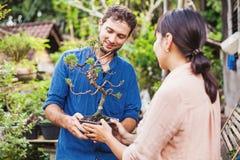 Jeunes jardiniers avec des bonsaïs images libres de droits