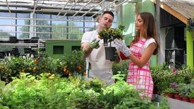 Jeunes jardiniers tendant une usine en serre chaude clips vidéos