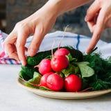 Jeunes légumes frais pour la salade saine Concombres de radis dilués images libres de droits