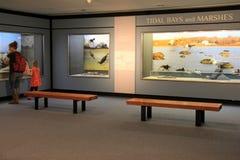 Jeunes mère et enfant, se renseignant sur les baies et les marais de marée dans le musée de l'état de New-York, Albany, New York, Photos libres de droits