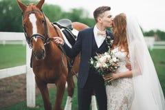 Jeunes mariés dans la forêt avec des chevaux Couples de mariage Beau portrait en nature Images libres de droits