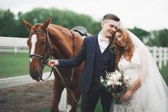 Jeunes mariés dans la forêt avec des chevaux Couples de mariage Beau portrait en nature Photo libre de droits