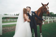 Jeunes mariés dans la forêt avec des chevaux Couples de mariage Beau portrait en nature Photographie stock