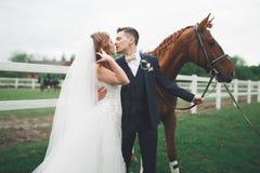 Jeunes mariés dans la forêt avec des chevaux Couples de mariage Beau portrait en nature Photos stock