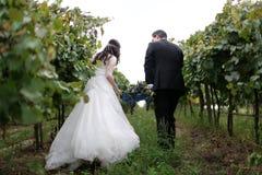 Jeunes mariés dans les vignes Photos libres de droits