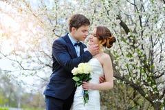 Jeunes mariés marchant dans le jardin de floraison de ressort Image stock