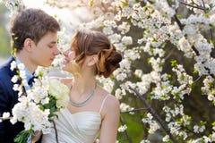 Jeunes mariés marchant dans le jardin de floraison de ressort Photographie stock libre de droits