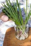 Jeunes oignons verts Image stock