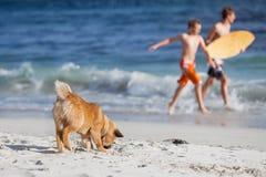 Jeunes pièces de crabot à la plage Image stock