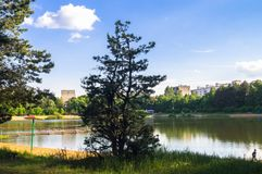 Jeunes pins le long du lac de forêt naturelle avec la plage sablonneuse artificielle, ajusté aux loisirs publics gratuits Images libres de droits