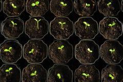 Jeunes plantes Photo libre de droits