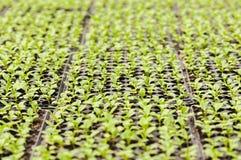 Jeunes plantes Images libres de droits