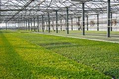 Jeunes plantes Images stock