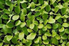 Jeunes plantes Photographie stock